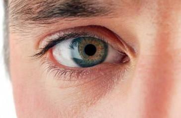 Kaj to pomeni, če človek pogleda v oči?