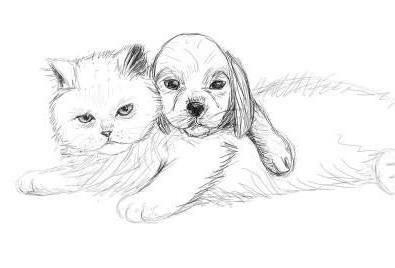 kako pripraviti mačko in pes v svinčniku korak za korakom za začetnike
