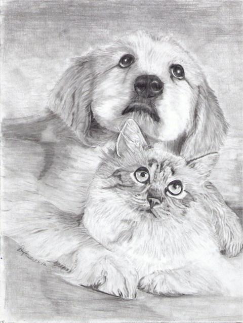 kako pripraviti mačko in psa