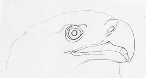 Kako pripraviti orla