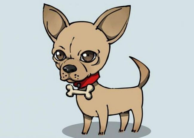 kako pripraviti psa čihuahu s svinčnikom