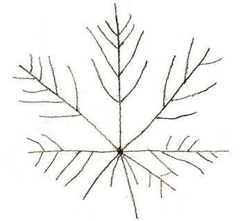 kako narisati javorjev list v stopnjah