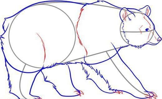 kako pripraviti medveda v svinčniku korak za korakom