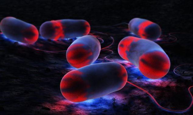 Legioneloza, simptomi, diagnoza, zdravljenje