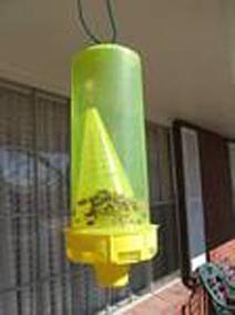 past za čebele