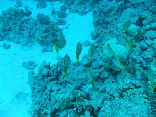 Počitek na Rdečem morju. Kaj je bolje, Hurghada ali Sharm el-Sheikh?