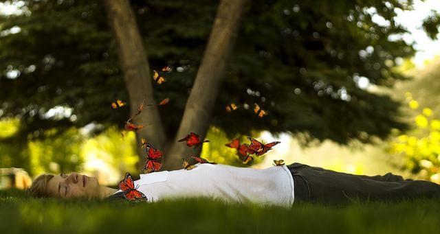 foto metulj v trebuhu