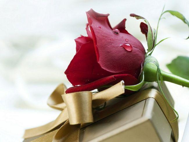 rose bordo