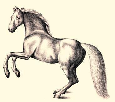 kako pripraviti lepega konja