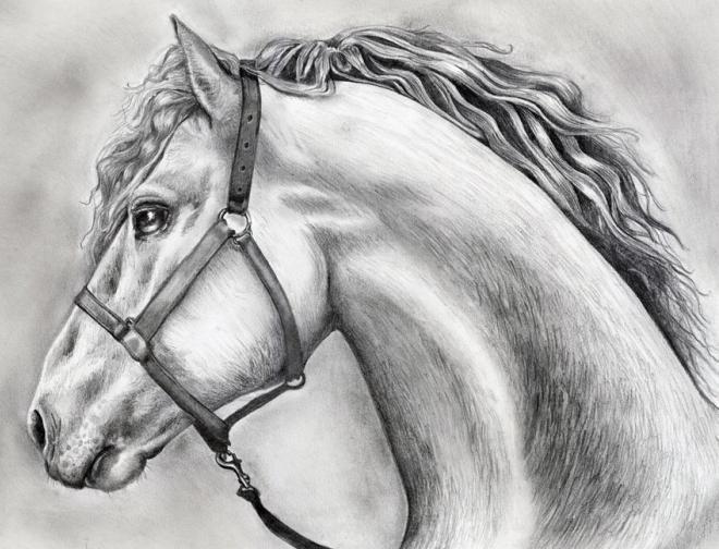 kako pripraviti konjovo glavo s svinčnikom