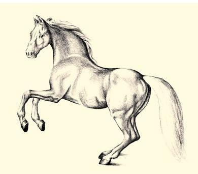 kako pripraviti lepo valjanje konj