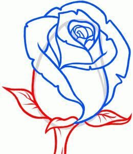kako pripraviti vrtnice