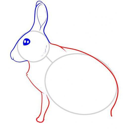 kako v fazah pripraviti zajec v svinčniku